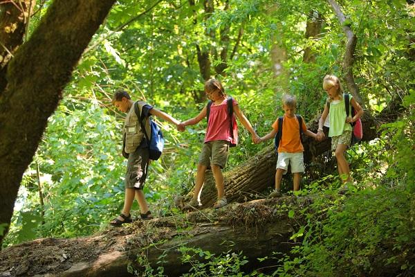 vitalis bienestar campamentos de verano desarrollo hijo