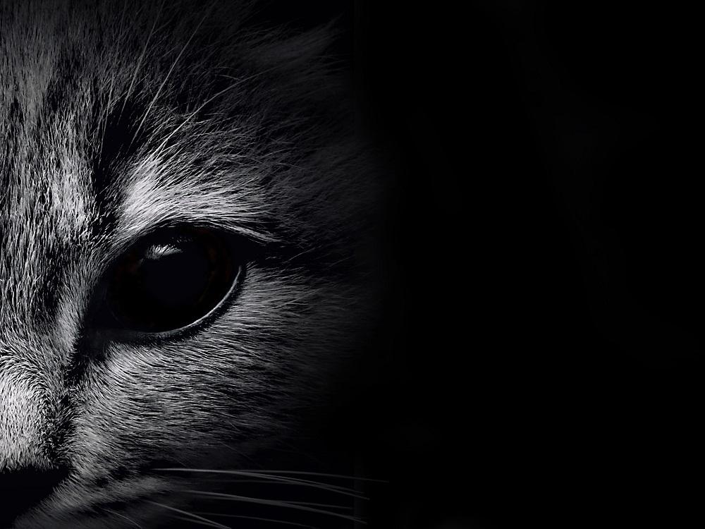 que dicen los gatos cuando maullan