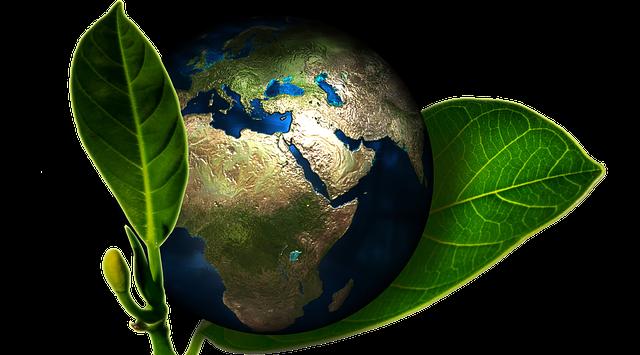 Fundación Biodiversidad protege la capa de ozono