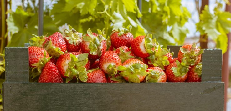 Consumes alimentos ecológicos