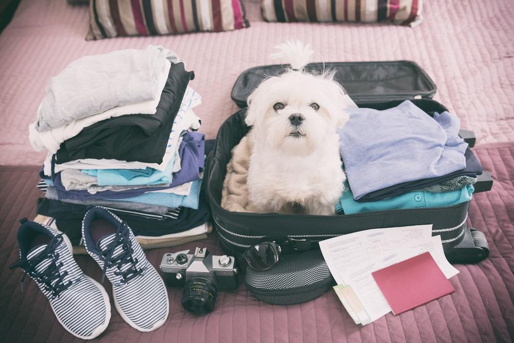 ¿Qué hacer con tu mascota cuando te vas de viaje? Conoce las mejores alternativas con Vitalis Bienestar